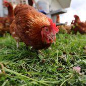 140.000 Hennen ins Land gebracht