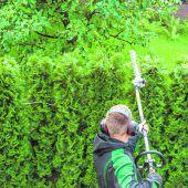 Wild wucherndes Grün