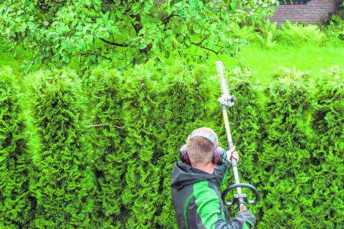 Um Pflege und Wartung von Bäumen und Sträuchern hat sich der Eigentümer zu kümmern.