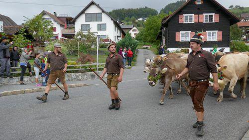 Am Wochenende sind 76 Milchkühe von den beiden Fraxner Alpen Maiensäß und Staffel ins Dorf heimgekehrt. sandra Kathan
