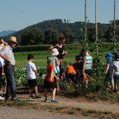 Götzner Junggmüas auf dem Karottenfeld