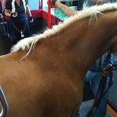 Mann nahm Pferd mit in Zug