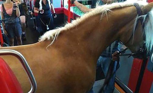 Ein Mann sorgte mit seinem Pferd in einem Zug für Aufsehen. ©Twitter/CCzermak