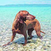 Badeurlaub mitVierbeinern