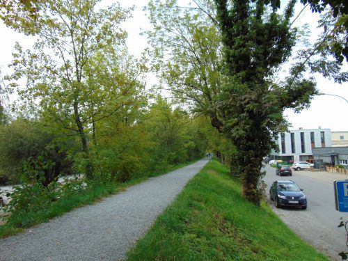 An der Ach müssen im Oktober einige Eschen gefällt werden. Sie werden durch neue Bäume ersetzt. mima