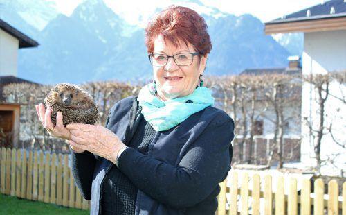 Anneliese Dalpez gibt ihre stacheligen Freunde paarweise in eine geeignete Umgebung ab. VN/JS