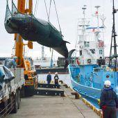 Japan prüft möglichen Austritt aus Walfangkommission