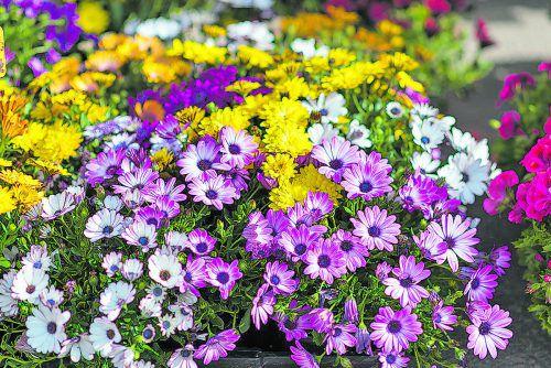 Die Blumenarrangements sind auch als Bienenweiden sehr wertvoll.