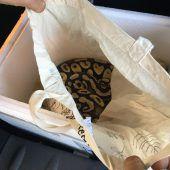 Königspythons im Gepäck