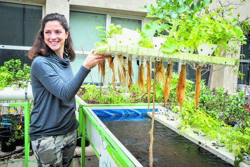 Eine gigantische Biofarm auf dem ältesten Einkaufszentrum Israels.