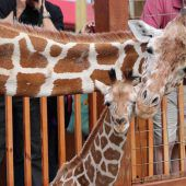 Kuschel-Giraffen
