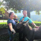 Bürserberger Familie trauert um ihren Esel Pauli, der von Hund zerfleischt wurde. B1