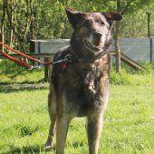 Neues Daheim für Hundesenioren