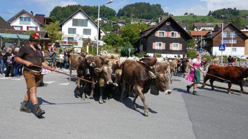 Für die Älpler und die 180 Rinder ging es zurück ins Tal. SAN