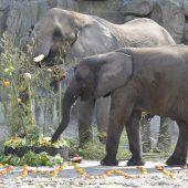 Tiergarten Schönbrunn wieder bester Zoo Europas
