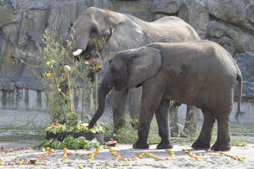 Großtiere werden im Tiergarten Schönbrunn unter besten Standards gehalten. APA