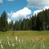 Moorgebiete leisten wichtigen Beitrag zum Klimaschutz
