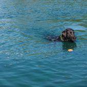 Hunde-Bade-Spaß in Unterer Au