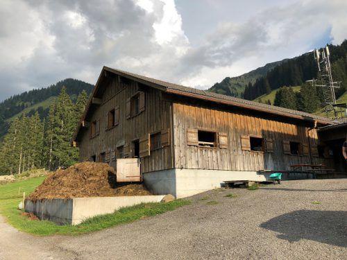 Vergangene Woche ging eine erfolgreiche Alpsaison zu Ende. Die Vorbereitungen für den kommenden Sommer sind schon angelaufen. VN/Witwer