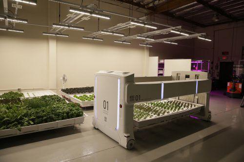 Angus heißt der mögliche Gemüsebauer der Zukunft. AP