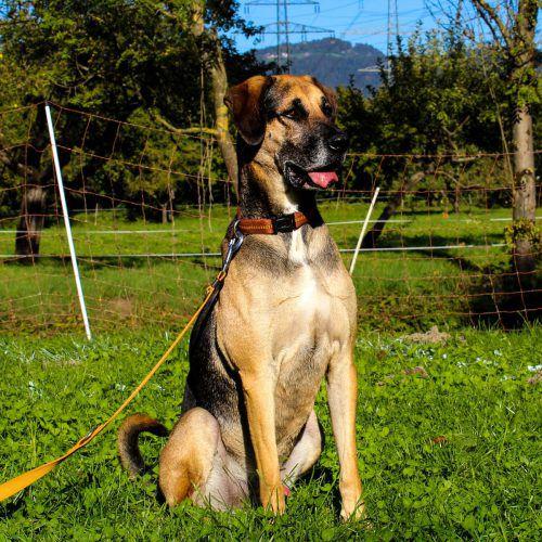 Auf der Suche nach einem Daheim für immer sind die Hunde Bella (l. o.) und Ares (l. u.), Katze Nicki und Meerschweinchen Gerda. Tierschutzheim