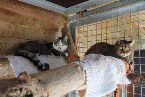 Beim Flohmarkt gibt es die Möglichkeit, die Schützlinge des Vorarlberger Tierschutzheims kennenzulernen. rauch