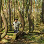 Mit Conrad Amber zu uralten Bäumen