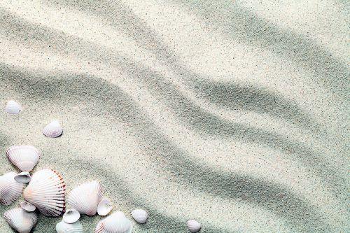 Die Muschel als Symbol: Der Verein will für Betroffene eine Boje und ein Anker im Meer der Verzweiflung sein.Fotolia