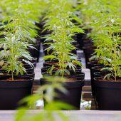 Kanadisches Unternehmen sucht Cannabis-Tester – Rücklauf enorm