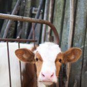 Wirbel um Schreiben zu Tiertransporten