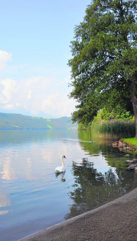 Mit einer Länge von 11,5 Kilometern und einer Breite von bis zu 1,8 Kilometern ist der Millstätter See der zweitgrößte See Kärntens. lcf