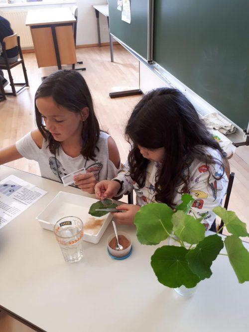 Projekt Bionik von Schülerinnen der BAfEP an der VS Sebastianplatz.VS Sebastianplatz