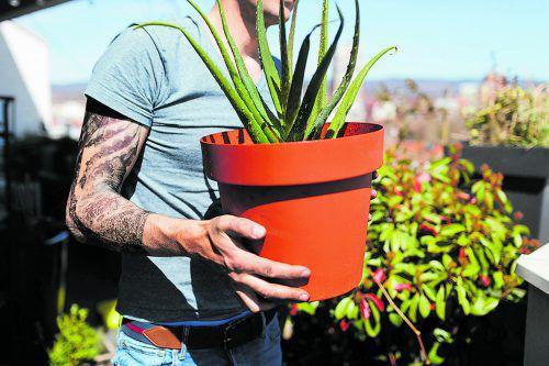 Temperaturen von acht bis zwölf Grad sind für die meisten Pflanzenarten im Winter ideal.