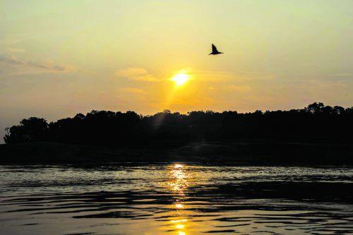 Am Jurua-Fluss brüten neunmal so viele Schildkröten vor 40 Jahren. APA