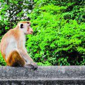 Vorsicht vorfrechen Affen