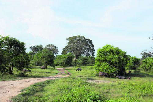 Der Udawalawa Nationalpark befindet sich im Süden der Insel. beate rhomberg