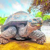 EinzigartigeRiesenschildkröten
