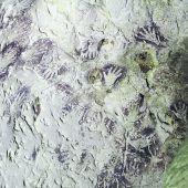 Das älteste Bild der Welt befindet sich in einer Höhle auf Borneo