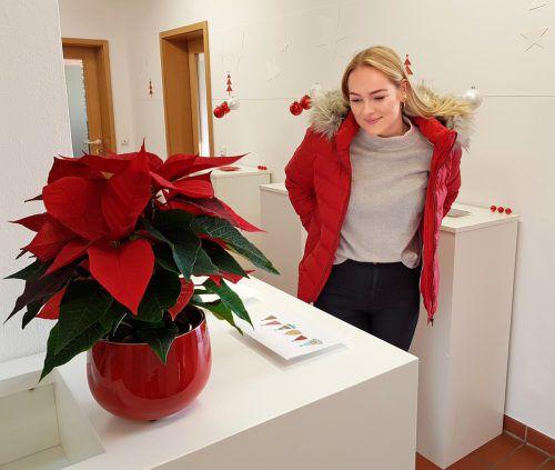 Die Weihnachtskarten gibt es auch online unter www.vorarlberger-kinderdorf.at vbg.kinderdorf
