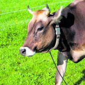 Schweizer lehnen Fördergeld für Hörner bei Kühen ab