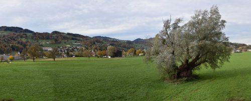 In diesem Gebiet am östlichen Ortsrand beginnt im Frühjahr 2019 der Bau der neuen Sportanlage Gaißau. Die mächtige Weide, ein Naturdenkmal, bleibt natürlich erhalten. ajk