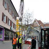 Mit neu gepflanzten Bäumen den Ruf der Gartenstadt erhalten