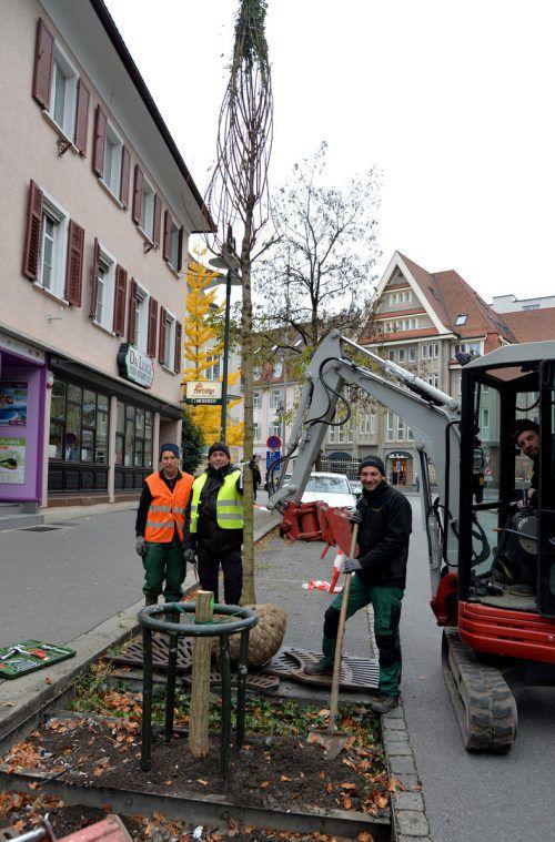 Neuanpflanzungen von Bäumen übernimmt die Stadtgärtnerei. Stadt