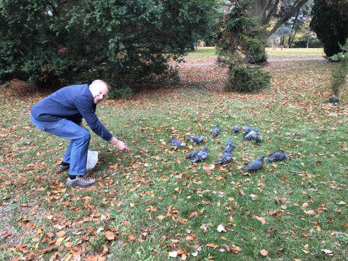 Walter Weider und seine Tauben. Sie erkennen ihn, wenn er durch den Park beim Palais Thurn und Taxis spaziert. VN/Hämmerle