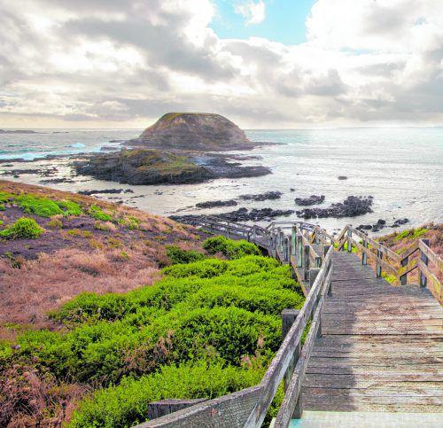 Auf Phillip Island, südlich von Melbourne leben viele geschützte Tiere, darunter auch Zwergpinguine. shutterstock (5)