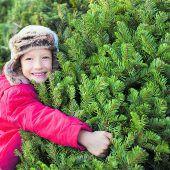 Lange Zeit Freude am Christbaum