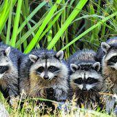 Lebensraum für Wildtiere