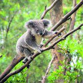 Australien: Tierisch was los