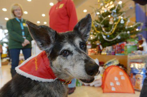 Hunde und Katzen können mit Weihnachten nicht viel anfangen. Im Gegenteil: Das hohe Christenfest birgt für sie Gefahren. dpa