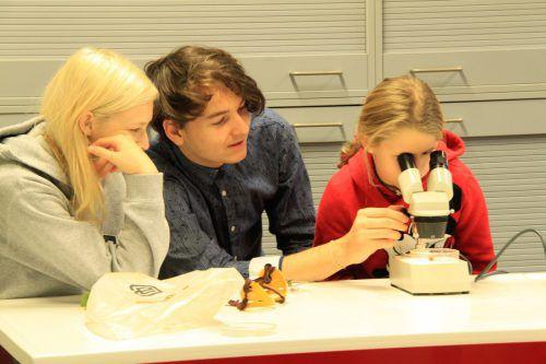 In der Rolle des Lehrers brachten BORG-Schüler Volksschulkindern den Umgang mit dem Mikroskop näher. me